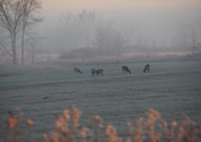 Small Deer Herd